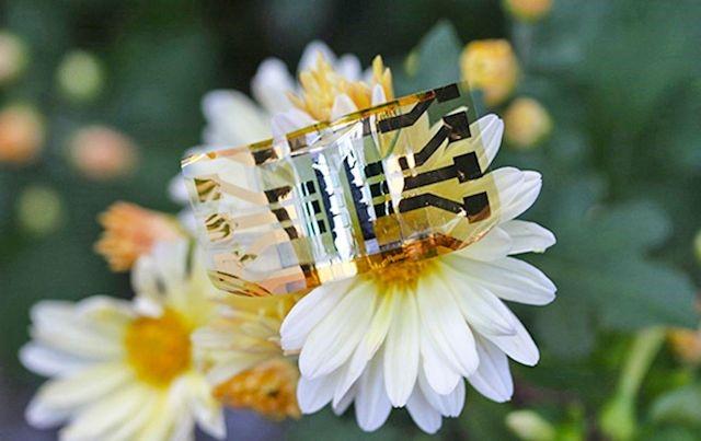 La nouvelle cellule solaire des chercheurs de l'université de Monash (Australie), posée sur un pétale de fleur.