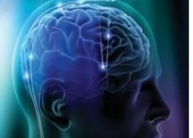Une representation du cerveau humain.